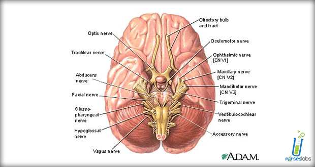 Cranial-Nerves-Assessment