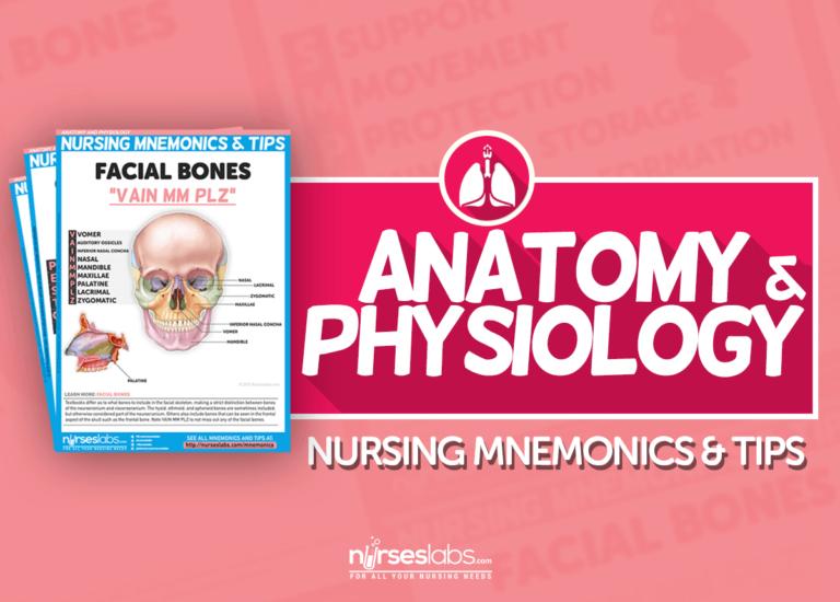 Anatomy and Physiology Nursing Mnemonics and Tips