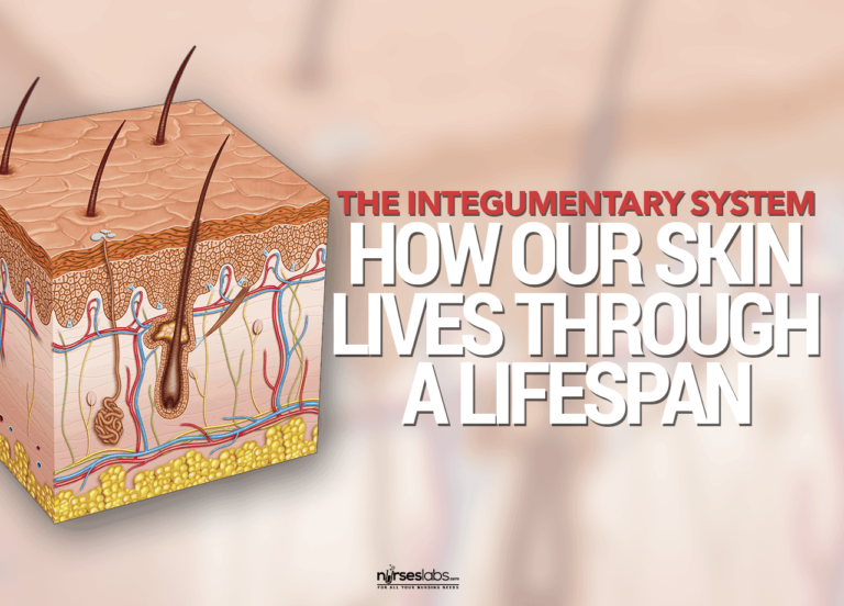 How The Integumentary System Lives Through a Lifespan