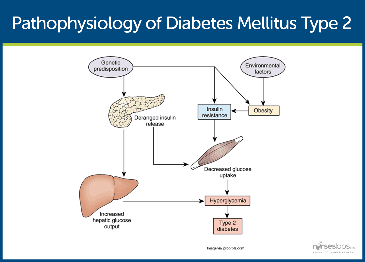 Pin Diabetes Mellitus Type 2 Pathophysiology Diagram Image
