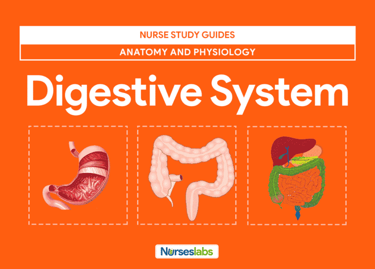Featured-Digestive System Anatomy and Physiology