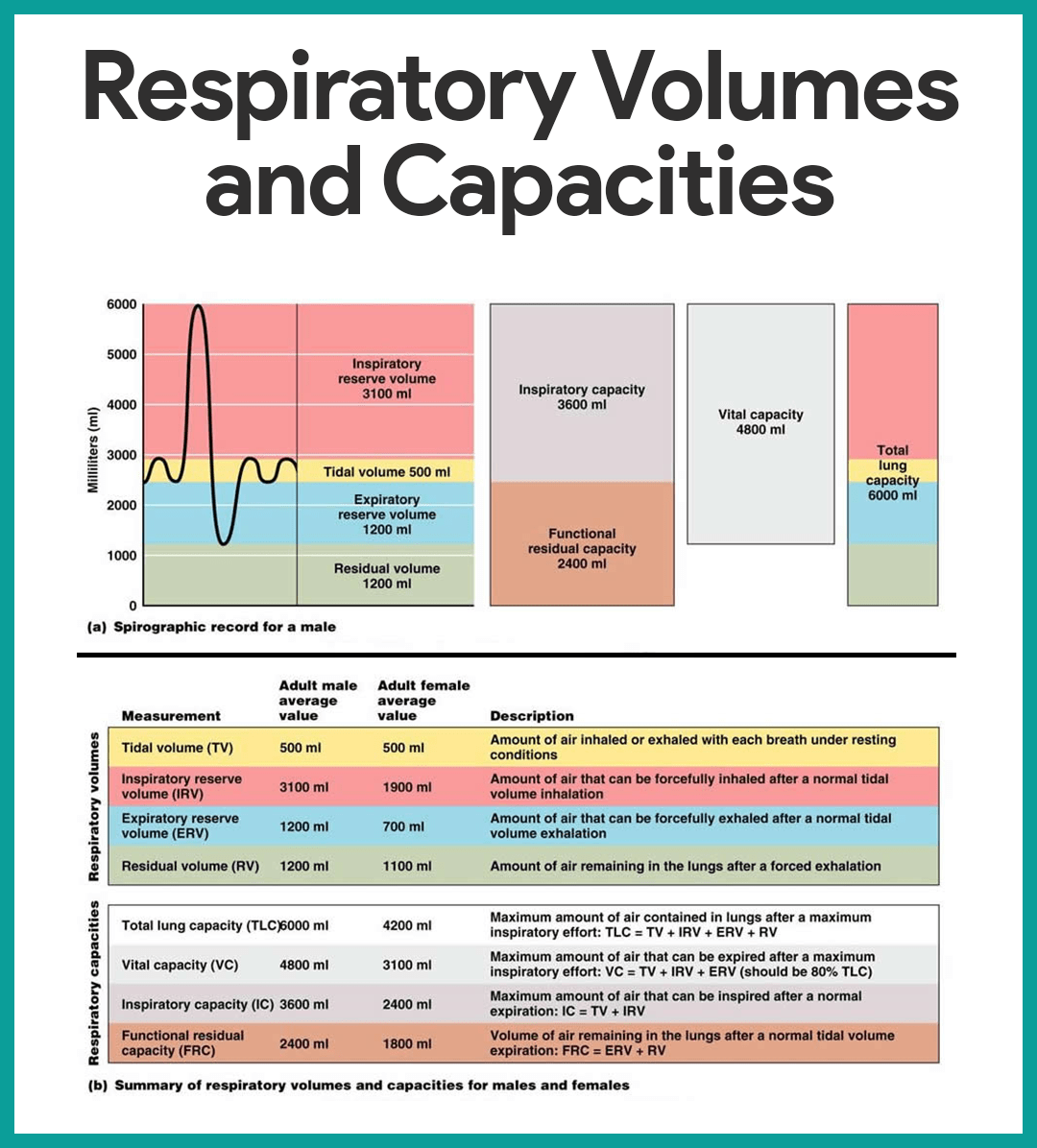 Respiratory Volumes and Capacities-Respiratory System Anatomy and Physiology
