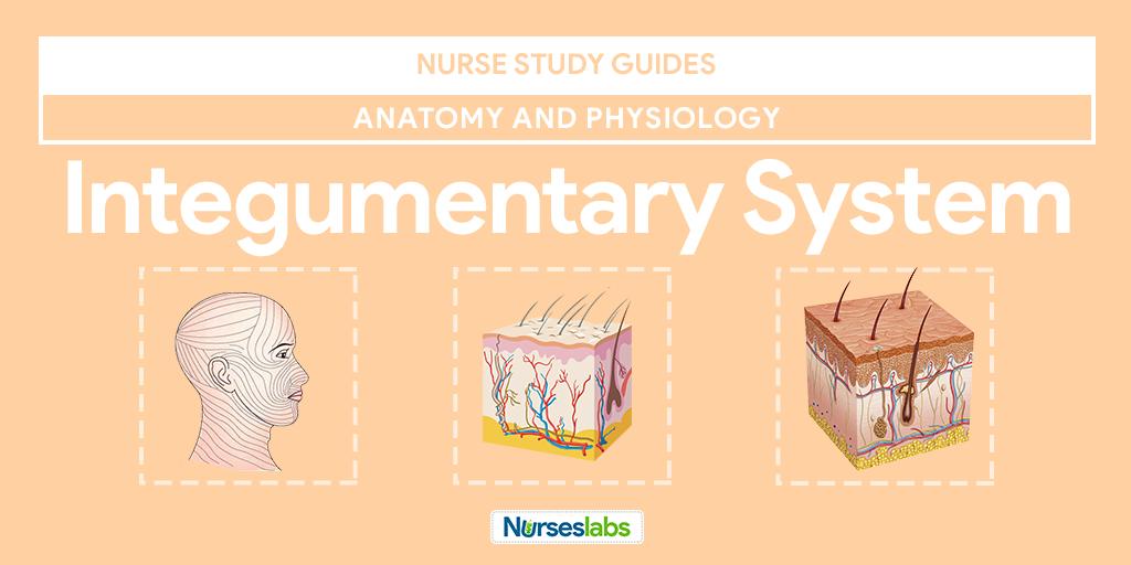 Integumentary System Anatomy and Physiology • Nurseslabs