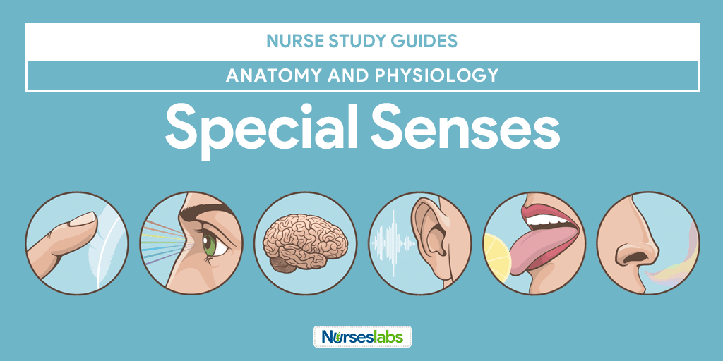 lab report anatomy and physiology the special senses