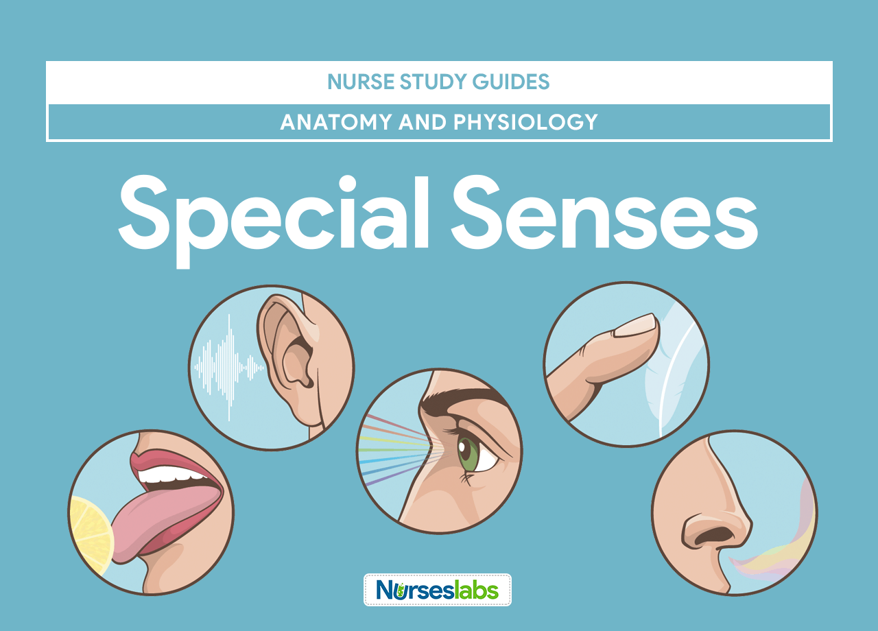 Special Senses Anatomy and Physiology • Nurseslabs