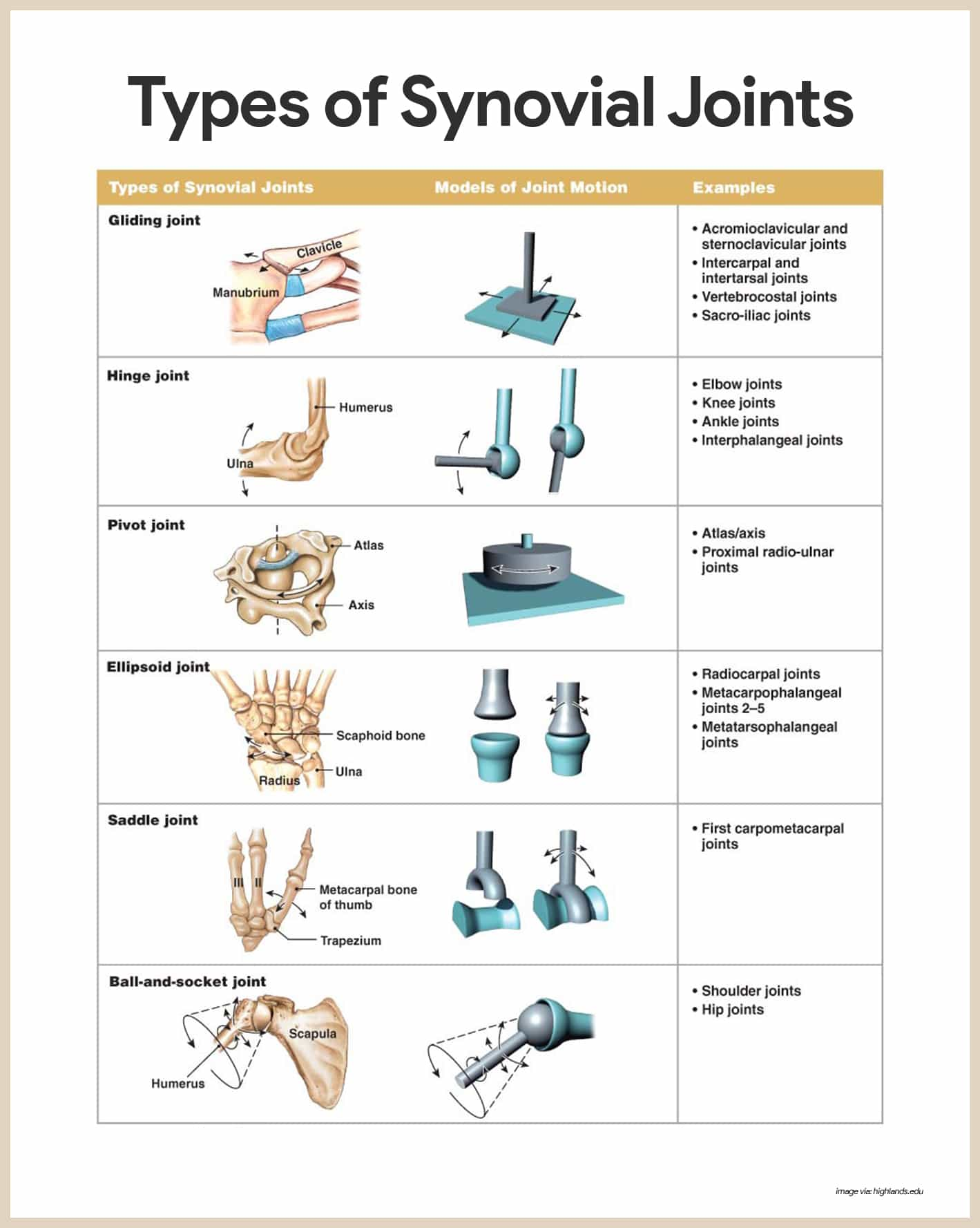 Synovial Joints-Skeletal System Anatomy and Physiology for Nurses