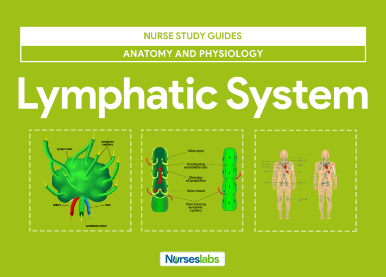 - Lymphatic System Anatomy and Physiology