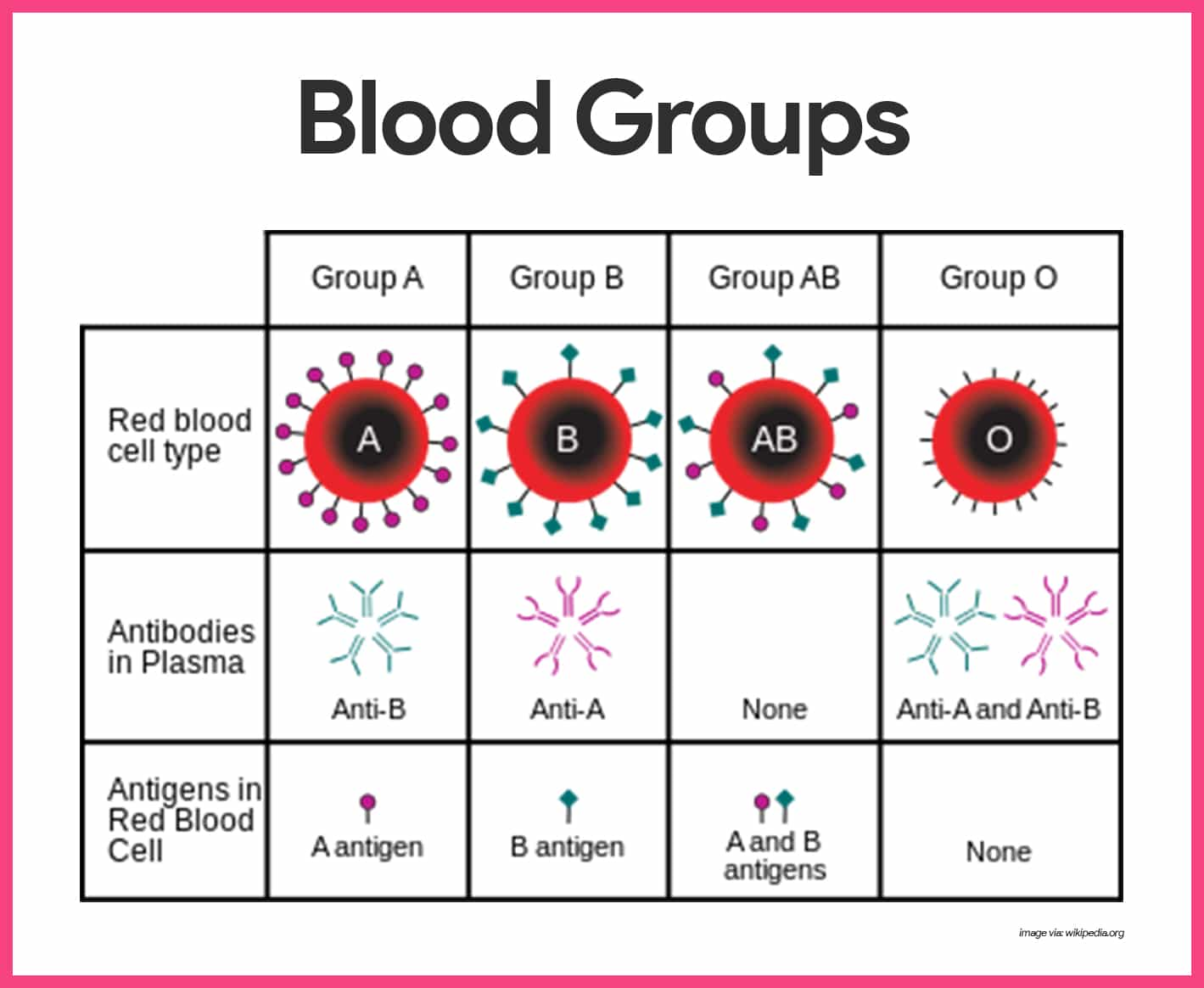 Blood Anatomy And Physiology Study Guide For Nurses Red White Cell Diagram Of Cells Human Groups