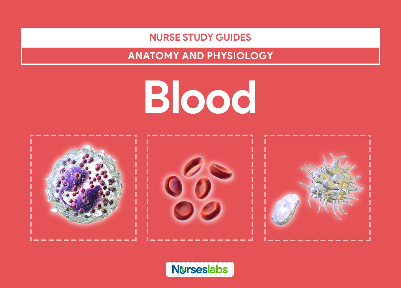 Blood Anatomy and Physiology: Study Guide for Nurses