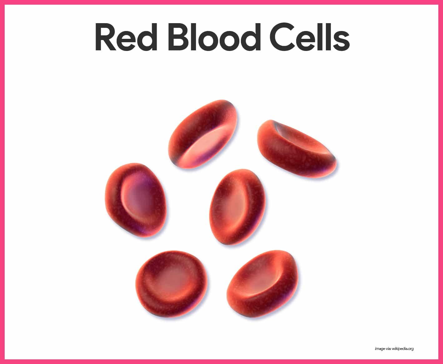 Blood Anatomy And Physiology Study Guide For Nurses Human White Cell Diagram Cells Overview Stock Rbcs Differ From Other Because They Are Anucleate That Is Lack A Nucleus Also Contain Very Few Organelles