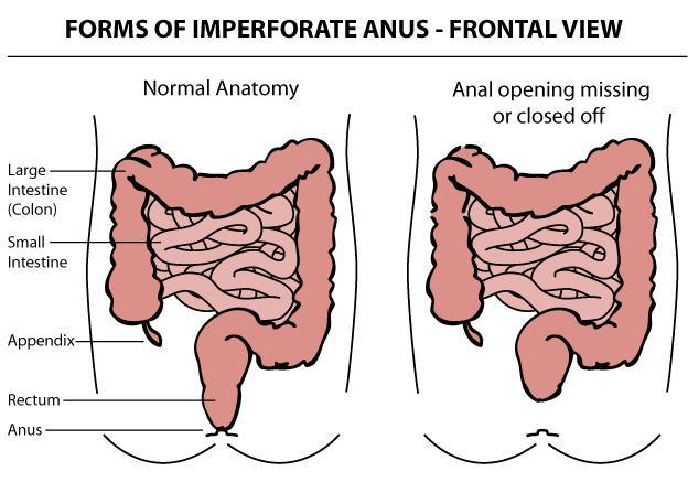 That anus devepment video Unfortunately! Duly